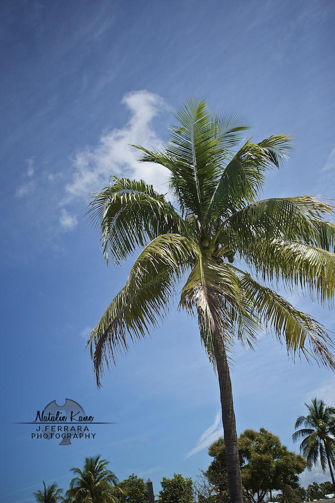 Key West Photography (1)