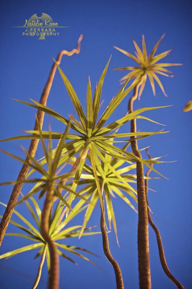 Key West Photography (6)